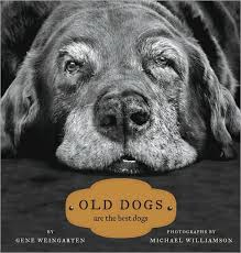 Book Old Dogs are the best dogs