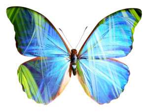 Image Butterfly