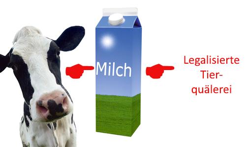 Legalisierte Tierquälerei? Die Geschichte einer Milchkuh.