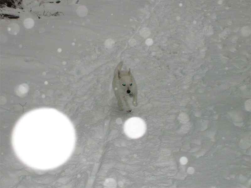 Schnee-1a