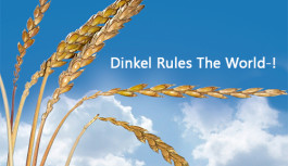 Dinkel Rules The World!