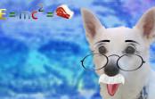 Quantenphysik — hundeleicht erklärt!