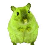 green-rat