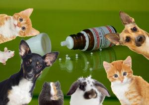 homeopathy-962079_1280