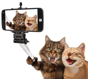 selfi cats