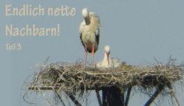 Neues von Familie Storch!