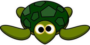 turtle-297662_640-1