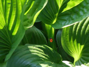ladybug-179493_1280