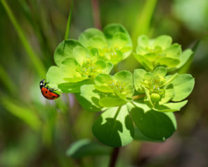 ladybug-250425_1280