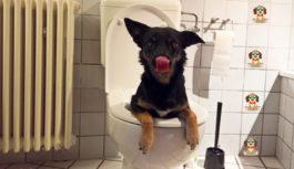 Die liebe Not mit dem #Hundekot!